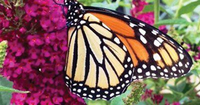 Hummingbird & Butterfly Heavenly Gardens