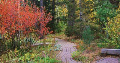 Top Fall Color Shrubs for Arizona Autumn