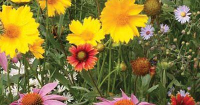 Wildflowers ~ A Gardener's Perfect Winter Gift!