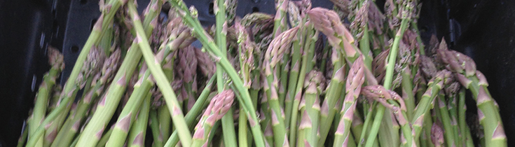Vegetable of the Month: Asparagus