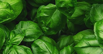 Summertime and Basil