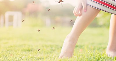 9 Plants that Repel Mosquitoes, Flies & Spiders