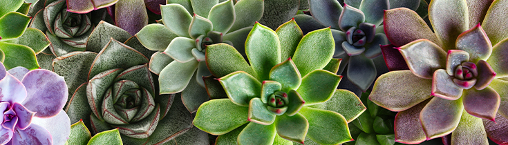 Autumn 2021 Free Garden Classes taught at Watters Garden Center